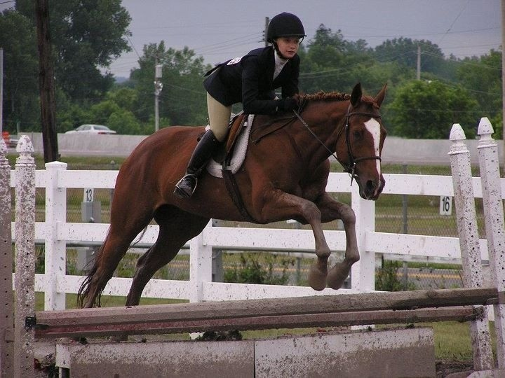 Horse Heaven Stables - Horses For Sale/Lease